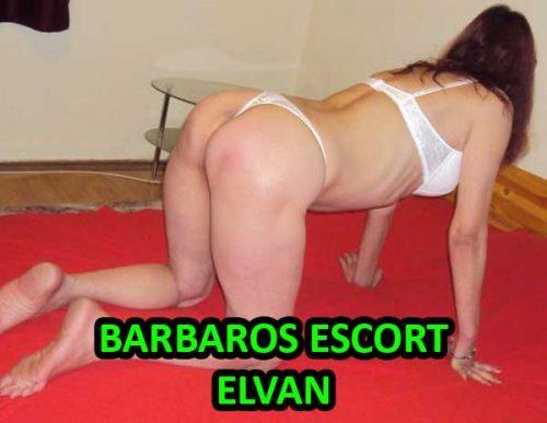 Masajcı Barbaros Escort Elvan